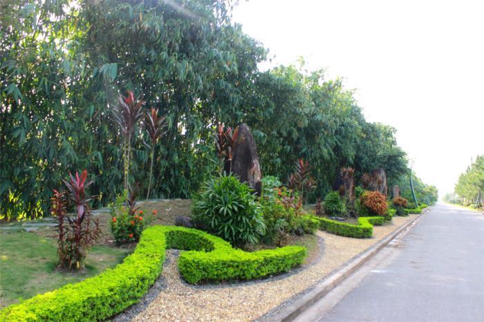 ảnh-thực-tế-dự-án-the-phoenix-garden (1)