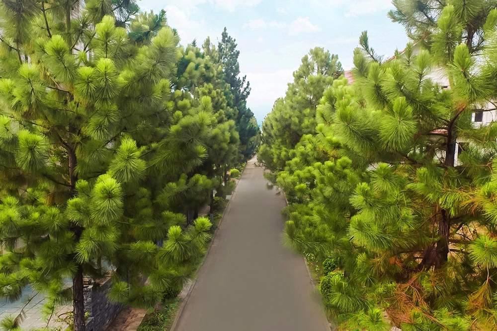 canh-quan-khu-do-thi-sinh-thai-the-phoenix-garden (4)
