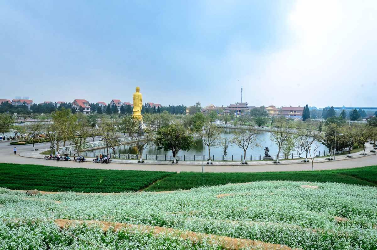 vuon-hoa-cai-the-phoenix-garden (8)